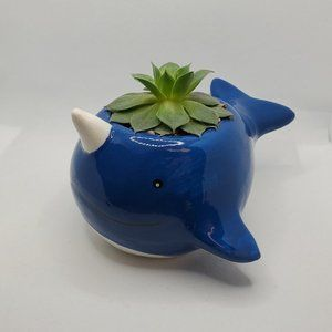 Narwhal Whale Planter with Succulent